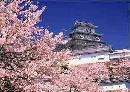 图文:举办城市大阪之风光无限 樱花天守阁