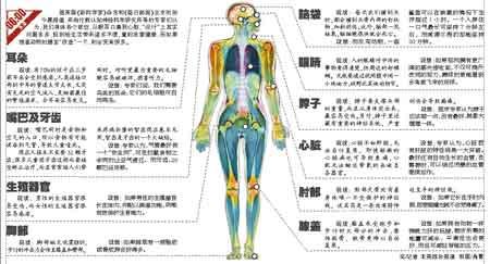 人体脂肪_人体器官不完美专家出招想修补