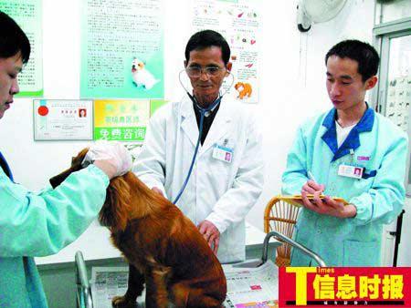 国内从事宠物行业的兽医师稀缺。