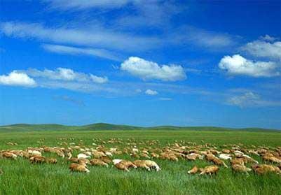迷人的内蒙草原