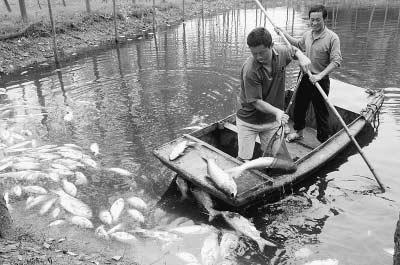 鱼塘里不时有鱼翻起白肚。