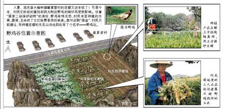 """京北最大的水果玉米采摘园成""""重灾区"""""""