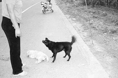 一起玩耍、嬉戏,如今它去了。为默默守护对方,小黑狗狂吠路人