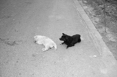 守了两天一夜,小黑狗仍然舍不得离开