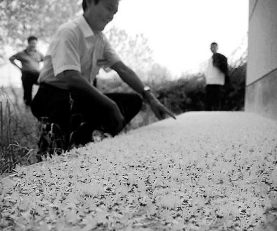 百万蜉蝣空中交配产卵死去遍地如雪(图)图片