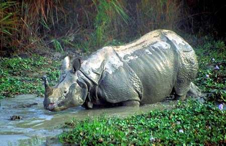 还有众多的稀有动物如孟加拉虎