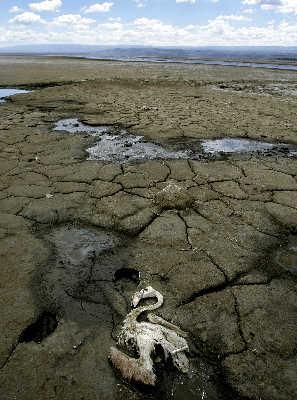 干涸的滩涂上,躺着一只死去的鸟。IC图