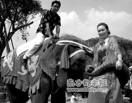 国产女王踩踏骑坐男-吹起唢呐,擂响大鼓,百余米长的迎亲队伍热闹地穿越农庄.游客惊讶图片