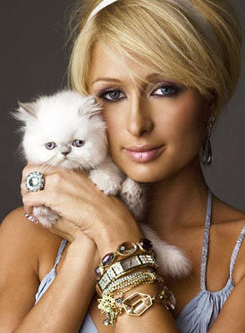 """希尔顿(设计对白:我的""""小猫咪""""又换人了)"""