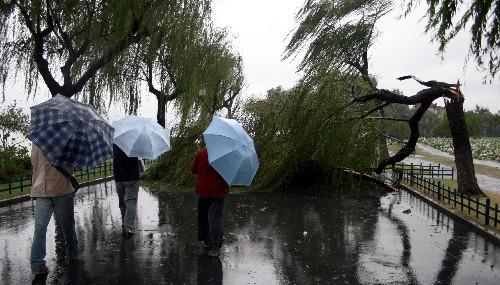 关注罗莎:暴雨袭杭州 洪水漫西湖(组图)