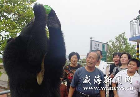 黑熊喝五六瓶啤酒不醉