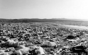 海滩上的大量废弃塑料瓶让人触目惊心