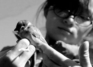 """鸟类环志工程启动 志愿者为鸟儿戴""""戒指"""""""