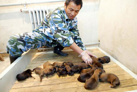 饲养员正在照顾刚出生的幼崽