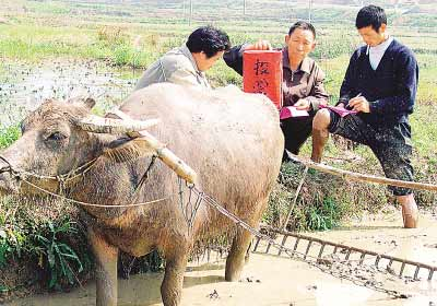 湖南省邵阳县第六届村委会换届选举,村民在地头投票。钟 华摄