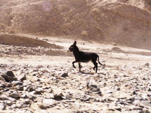 山区里的小毛驴,当地人称为驴娃子