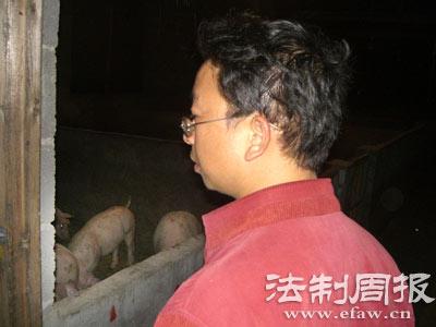 猪场里的800头猪,凝聚了符好武太多的期望。