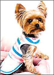 给罗拉替换的狗服就有120套。