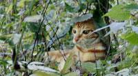 看到的明明是猫,可偏有人说是老虎