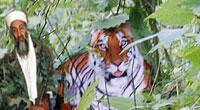 那里确实有老虎,我昨天还去了