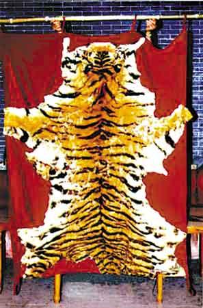 保存完好的虎皮。