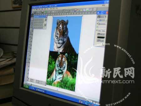 """第一步:从网上找到一张""""华南虎""""的照片"""