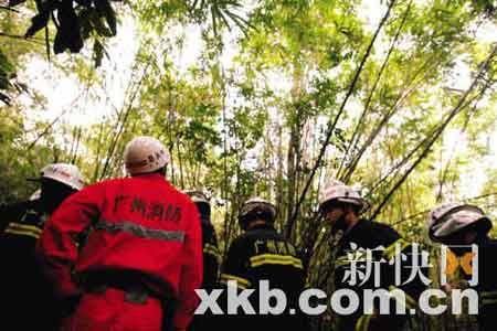 当地派出所和广州市消防特勤一中队的官兵摘除蜂巢。宁彪/摄