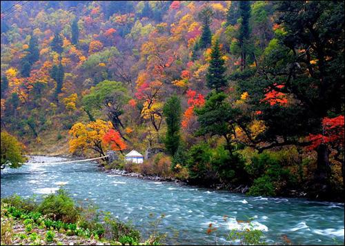 四川米亚罗:最大最好看的红枫风景区