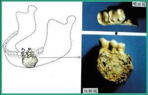 重庆发现我国最早古人类化石(组图)