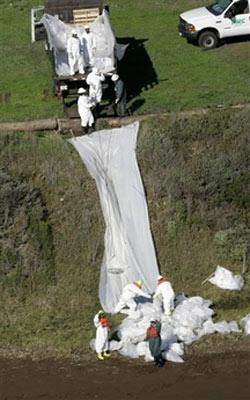加州州长施瓦辛格宣布该州进入紧急状态,以防止漏油面积的扩大