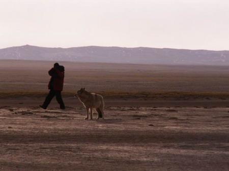 古道近距离拍摄母狼