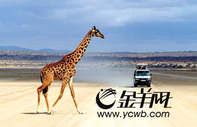 野生动物的天堂 非洲大陆的缩影[组图]