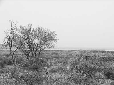 图为干涸的艾比湖湖床。