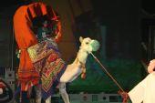 图文:2007射击亚锦赛开幕式精彩 驼背上的新娘