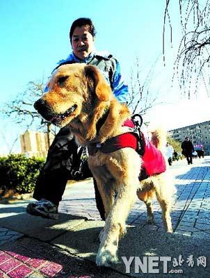 昨天,残奥会冠军平亚丽牵着导盲犬Lucky出行
