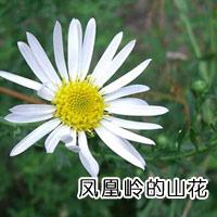 凤凰岭的山花