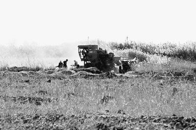 图为村民们开着推土机在湿地内开挖鱼塘。