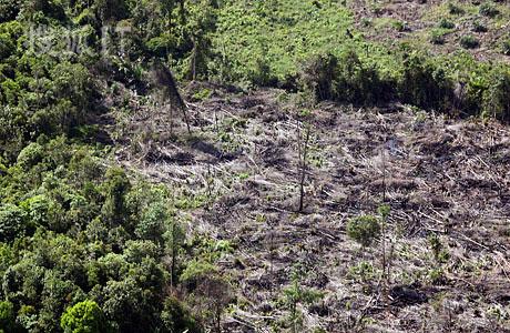 森林砍伐的简笔画内容图片展示