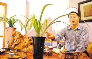 """从化市兰花协会会长说,他面前这盆墨兰""""长城牡丹""""属于稀有品种,因其形态特别,市场价格已超过一万元。记者梁嘉建摄"""