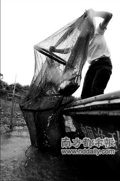 """花都赤坭,渔政大队人员在割断违规捕鱼用的俗称""""大口窿""""的渔网。"""