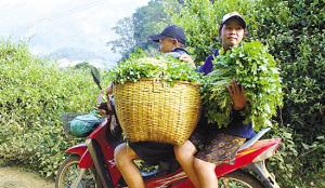 随着老挝大量进口中国出产的摩托车,农民可以骑着价廉物美的摩托车轻松地把蔬果及时运到市场。