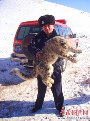 1月12日,记者在新疆温泉县拍摄的因饥饿而死亡的雪豹。