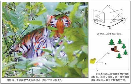 照片虎与年画虎相似率为0.9986