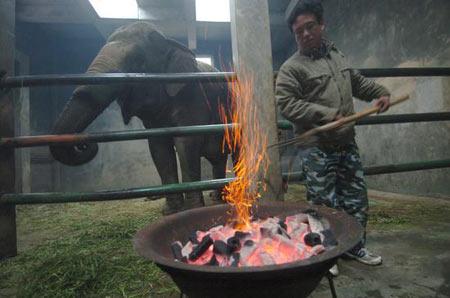 2008年1月28日,浙江宁波雅戈尔动物园,饲养员为大象烧起火炭。