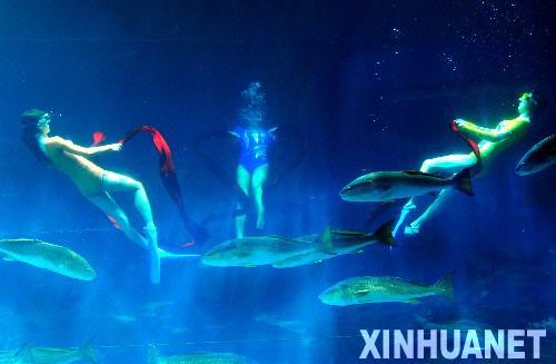 海底艺术体操