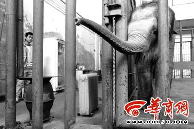 大象:大块头有大福气