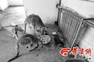 袋鼠一家:靠近暖气片,吃嘛嘛香