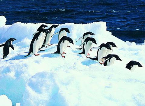 南北极:旅行欲望无止境[组图]