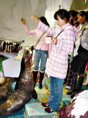 外来工游广州海洋馆时投喂海狮