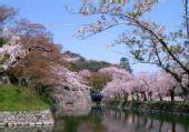 旋舞春风 日本温柔醉樱花